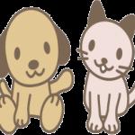 一人暮らしでペットを購入!飼いやすいのは犬それとも猫?