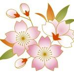 遅咲きで名高い関東の桜!穴場スポットはココにあった