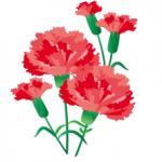 カーネーションの切り花を長持ちさせる技!手入れは超簡単