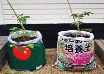 トマトのガーデニングは袋栽培がおすすめです。